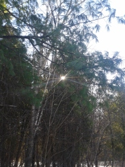 Catching sun2