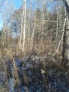 Deer behindthere