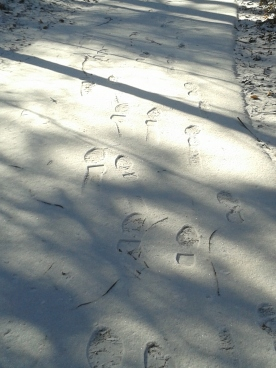 Footsteps in the snow...
