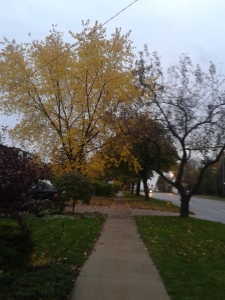 Fall Colors in my neighborhood!